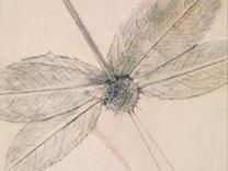 Exposición Max Ernst: Historia natural